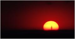 Закат в прерии. Одинокий кактус на фоне солнца