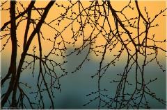 Красивый закат. Ветки деревьев на фоне желтого неба