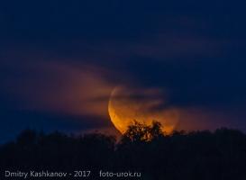 Луна над верхушками деревьев