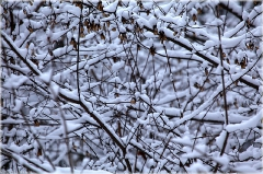 Зимний парк. Ветки дерева подсле снегопада. Зимние фото