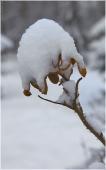 Кусты под снегом. Желтые листья под снегом. Зимний парк фото