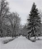 Сумерки в зимнем парке. Зимнее фото