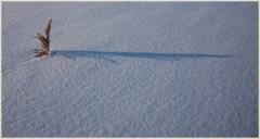 Фотография травинки и ее тени. Свет и тень в зимних пейзажах