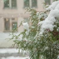 Верка дерева на размытом фоне. Снежинки и стена дома не в фокусе