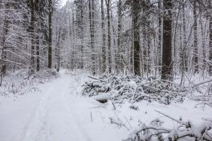 Фото зимнего леса. Тропинка в снегу