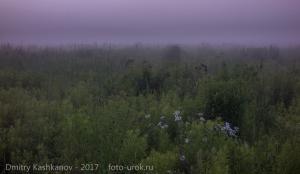 Сиреневый туман. Как это ни банально
