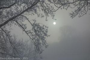 Туманная ночь. Луна