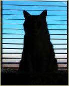 Фотография кошки у окна. Наблюдательный пункт для кошки. Кот на окне