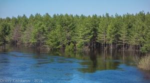 Керженец. Разлив. Деревья в воде