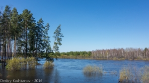 Фото разлива на реке Керженец. Нижний Новгород. Весна