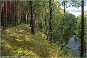 Осенний лес. Обрыв. Лесная речка