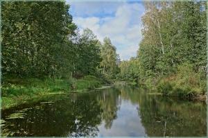 Суворощь. Лесная река. Осенний пейзаж
