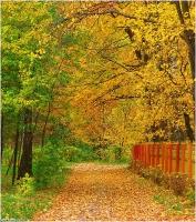 Ковер из желтых осенних листьев. Осенние фото