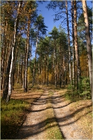Дорога в осеннем лесу. Осенние фото. Дмитрий Кашканов