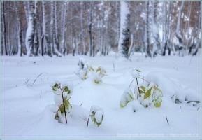 Под покровом первого снега
