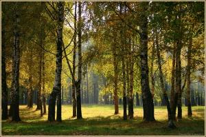 Осенний пейзаж. Осень в березовой роще. Фотографии осенних пейзажей
