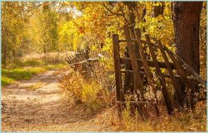 Осень. Дорога мимо старой деревни