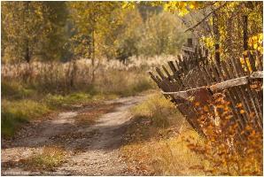 Старый забор. Фото. Пейзажи осени
