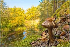 Осенний пейзаж с грибом на косогоре