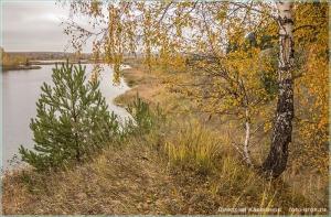 Пасмурный день, желтые листья, зеленые иголки