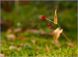Красная лесная ягода с капелькой дождя. Фото осеннего леса. Красивые осенние фото