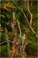 Коряга в осеннем лесу. Передний план резкий, задний план размытый. Глубина резкости