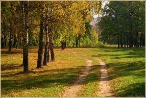 Дорога, по которой уходит лето. Осенние пейзажи. Фото осеннего леса. Лесная дорога