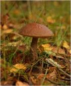 Фото грибов