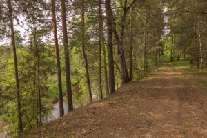 Лесная дорога вдоль реки. Летние фотографии