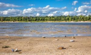 Фотографии реки Оки в районе города Горбатова. Ракушки на берегу