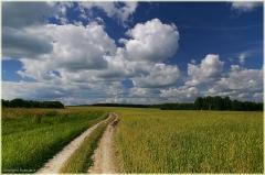 Русские дороги. Дороги России. Полевая дорога. Красивые летние фото. 11 год