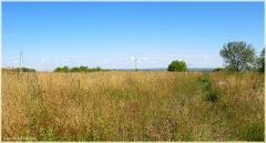Заброшенное поле. Поле с сорняками. Дорога. Самые красивые фото лета 2011