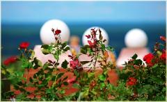 Цветы у  памятника Козьме Минину. Нижегородский кремль. Фото Нижнего Новгорода