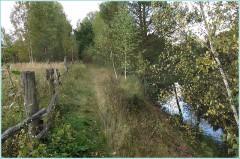 Груздево. Осенний лес на берегу речки Суворощь
