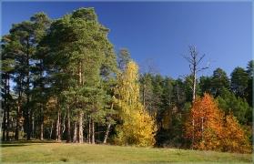 Пейзажи - Осень