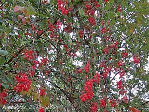 плоды растений в дендрарии